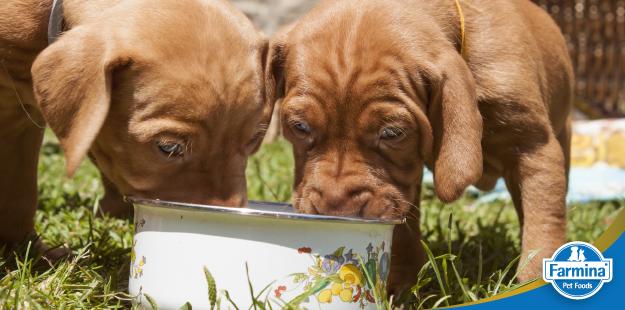 Capa de 'Os melhores alimentos para cães'