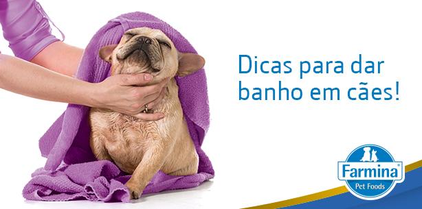 Capa de 'Dicas para dar banho no seu cão'