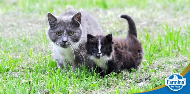 Capa de 'Nutrição felina nas diferentes fases da vida'