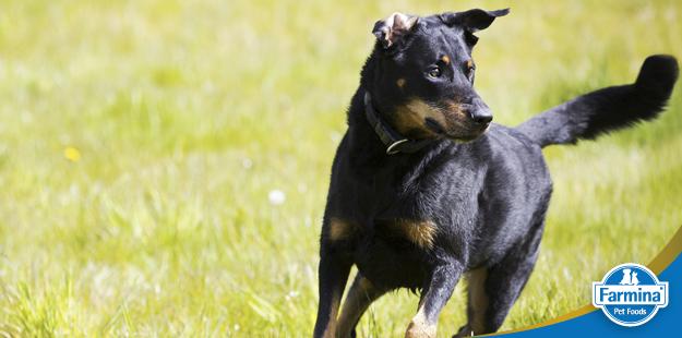 Capa de 'Nutrição de cães atletas'