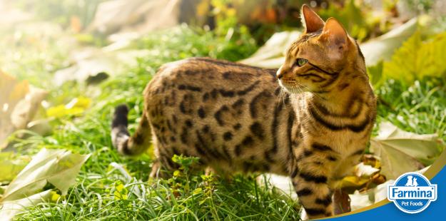 Raças de gatos - qual escolher?