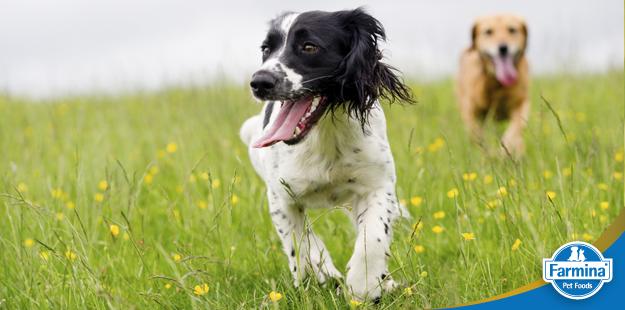 Capa de 'Problemas articulares em cães - Tudo o que você precisa saber'