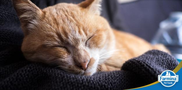 Capa de 'Saiba se o gato é o pet ideal para você e sua família'