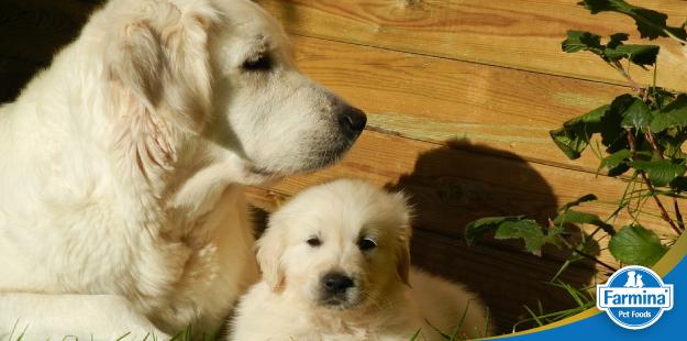 Nutrição dos cães nas diferentes fases de vida