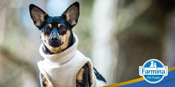 Capa de 'Quem bate é o frio: como proteger seu pet no inverno'