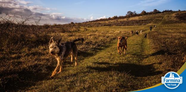 O comportamento dos cães nas diferentes fases de vida