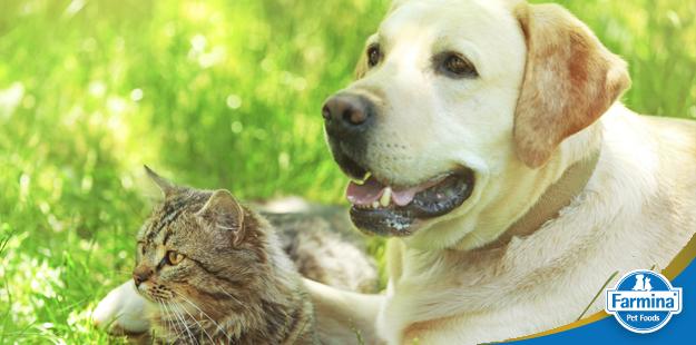 Capa de 'Insuficiência pancreática em cães'