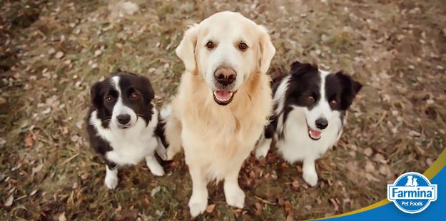 Raças de cães - qual escolher?