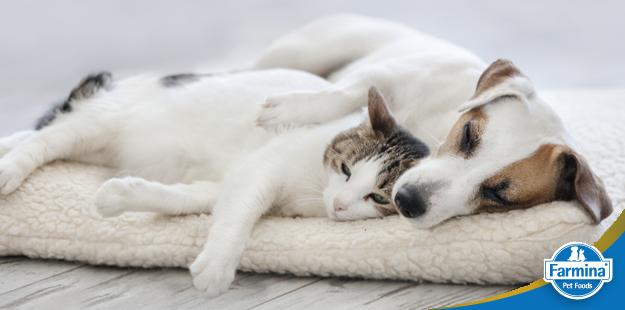 Capa de 'Cuidados importantes com cães e gatos de pele clara'