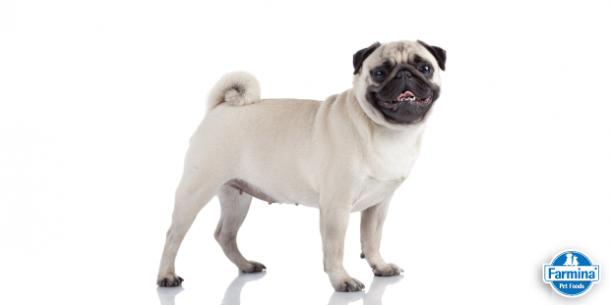 Capa de 'Diabetes em cães: saiba as causas e como tratar'