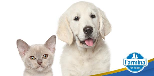 Capa de 'Cães e Gatos podem viver juntos?'
