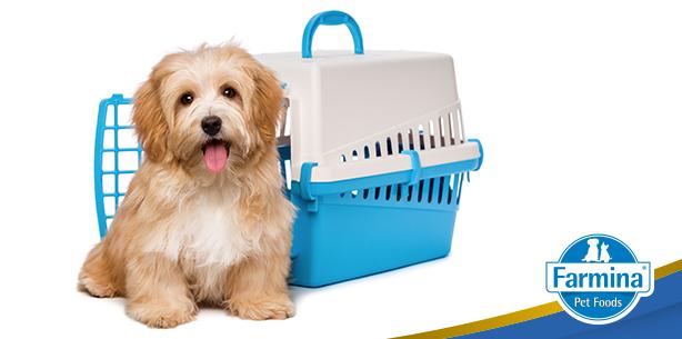 Capa de 'Dicas para viajar com seu cão'
