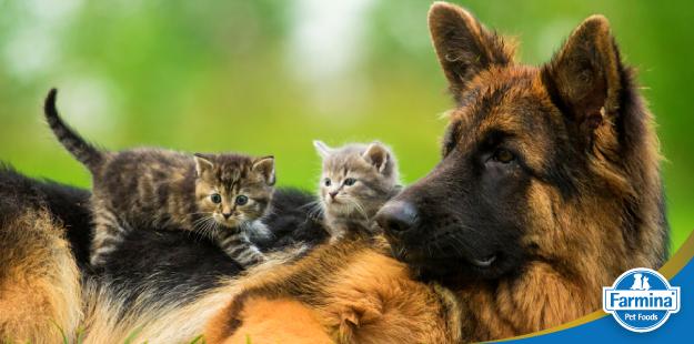 Capa de 'A história da nutrição dos cães e gatos - O começo de tudo'
