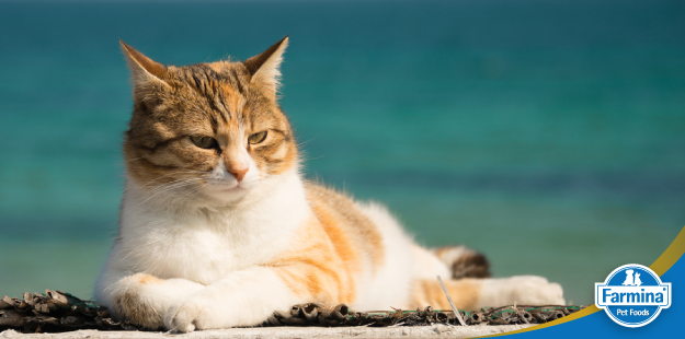 Capa de 'Dicas para viagens com seu gato'