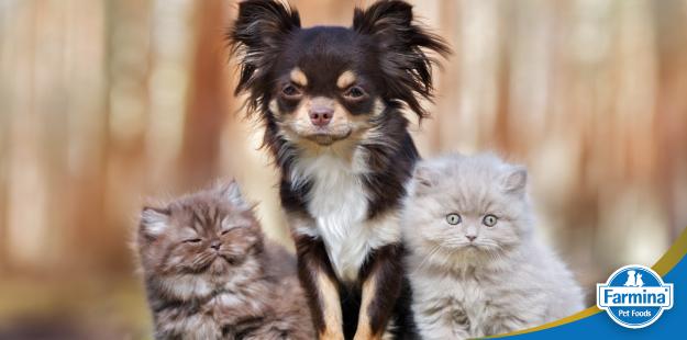 Capa de 'A história da nutrição de cães e gatos (parte 2) – O salto de qualidade e as novas opções'