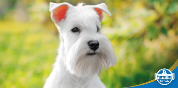 Capa de 'Alimentação para cães com alergia alimentar'