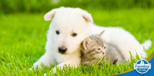 Capa de 'O plano nutricional para o seu animal de estimação'