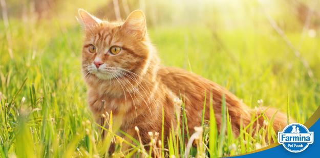 O carboidrato para gatos