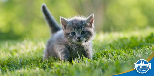 Gatos castrados - com o que devo me preocupar?