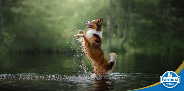 Capa de 'Fontes nobres de proteína para cães e gatos – Peixe'