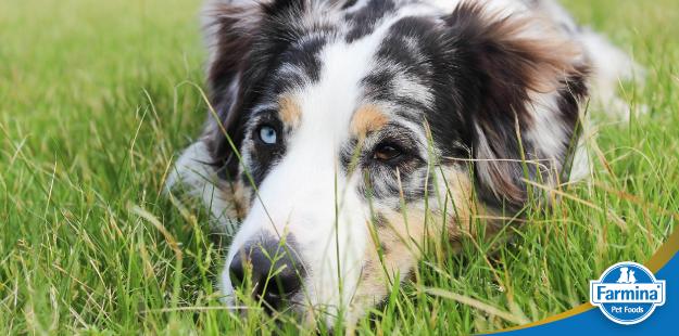 Meu cão rejeita a ração, e agora?