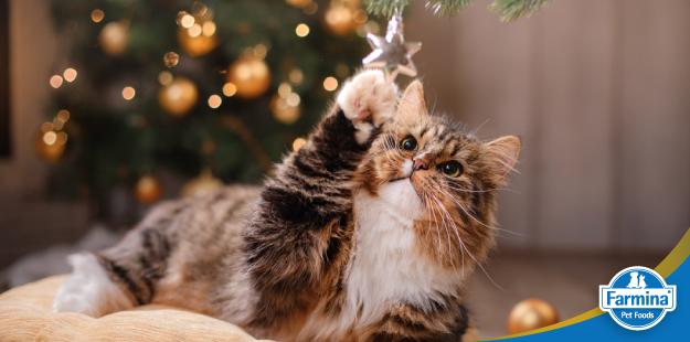 Capa de 'Cuidados essenciais com o pet durante as festas de fim de ano'