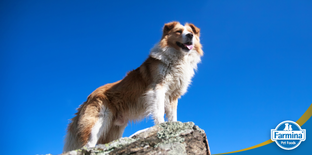 Capa de '4 Passos para melhorar a vida do seu pet em 2019'