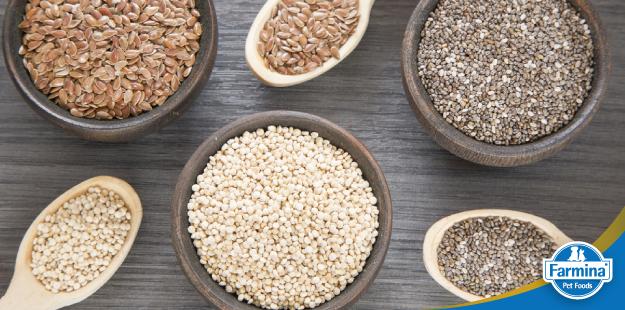 Capa de 'Alimentos funcionais e sua história - a quinoa e a linhaça'