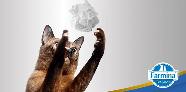 Capa de 'Quais os melhores brinquedos para seu gato?'