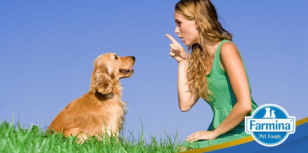 Capa de 'Cães desobedientes: como ensiná-los?'