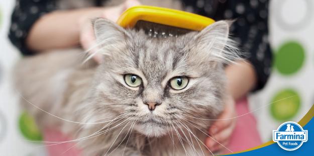 Capa de 'Cuidados com a pele e pelagem do seu gato'