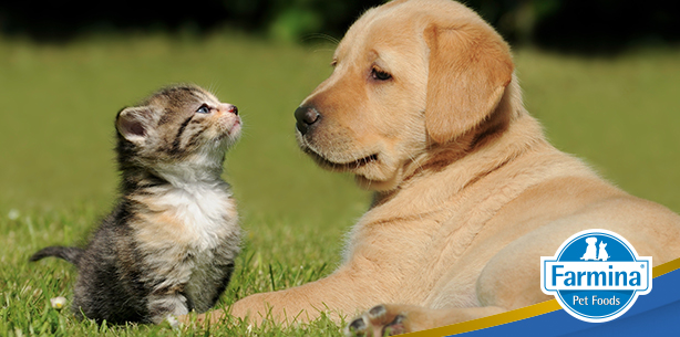 Capa de 'Diferenças entre cães e gatos'