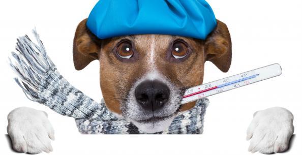 Capa de 'Vacina de gripe'
