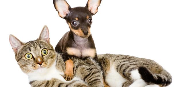 Capa de 'Prepare o seu pet para o barulho excessivo'