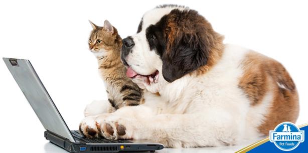 Capa de 'Luz, câmera, ação: vídeos divertidos com pets'