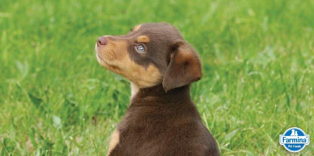 Capa de 'Como cuidar do cão filhote'