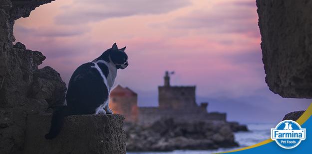 Capa de 'História e curiosidades sobre gatos'
