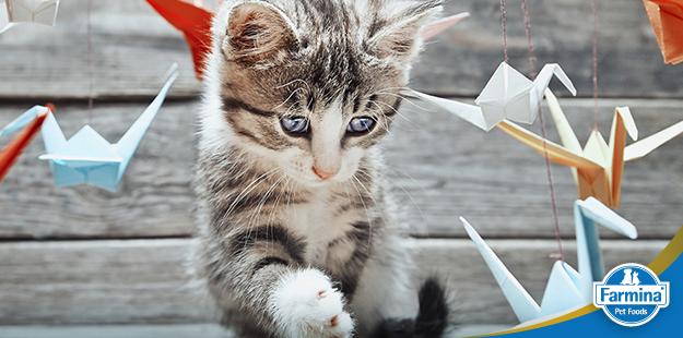 Capa de 'Como cuidar de gatinhos'