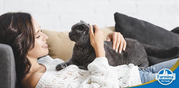 Capa de 'Gatos e seus benefícios para os seres humanos'