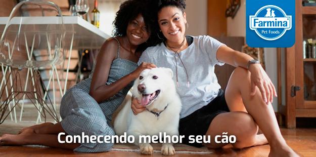 Conhecendo melhor seu cão