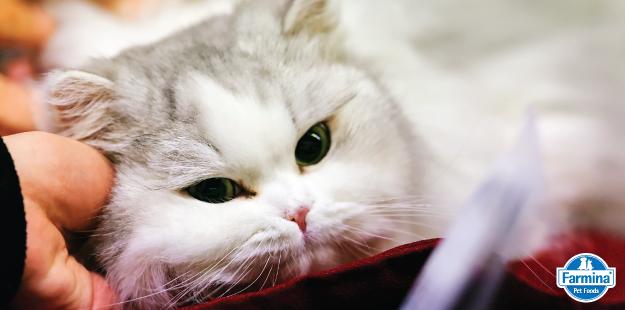 Capa de 'Cuidados para evitar acidentes com gatos dentro de casa'