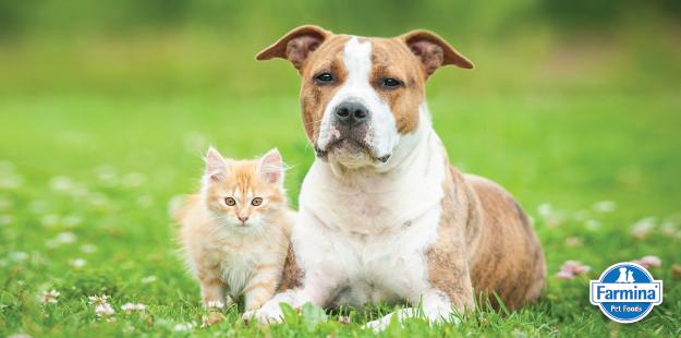 Capa de 'Vômito e diarreia em pets: tire suas dúvidas – Parte 1'