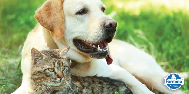 Capa de 'Vômito e diarreia em pets: tire suas dúvidas – Parte 2'