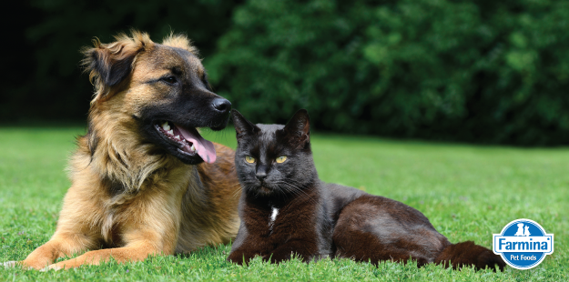 Capa de 'Nutrição ideal para cães e gatos'