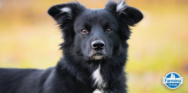 Capa de 'Cães vira-latas são tendência: conheça mais sobre eles'