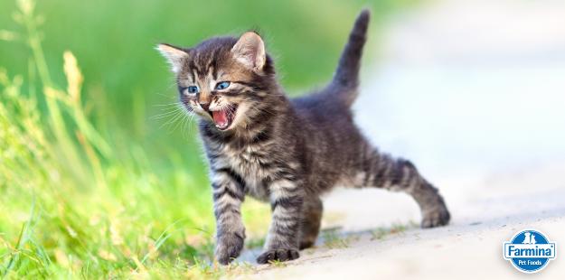 Capa de 'Seu gato mia? Conheça 8 motivos!'