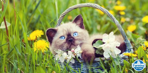Capa de 'Como cuidar do gato filhote'