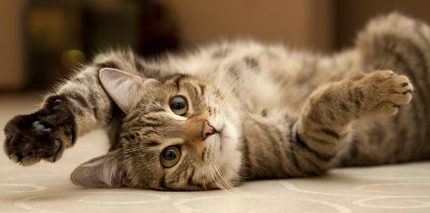 Capa de 'Como organizar os espaços do seu gato'