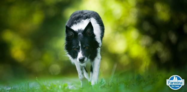 Capa de '6 indícios que comprovam a inteligência dos cães'