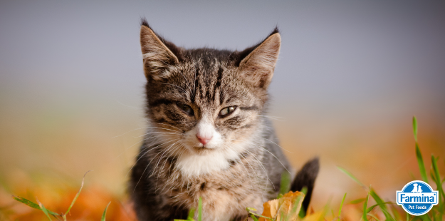 Capa de 'Particularidades Nutricionais dos Felinos'